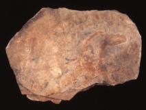 Las plaquetas (piedras calizas de superficie plana y diversos grosores) de la cova del Parpalló presentan representaciones zoomórficas, ramiformes, y geométricas ejecutadas con pigmentos rojos y amarillos. Imagen: Valentín Villaverde. Fuente: UV/Sinc.