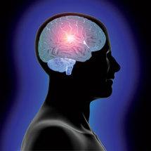 Decodifican el proceso neuronal de la visión de objetos tridimensionales