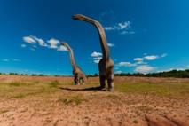 Los dinosaurios estaban adaptados a un clima cálido. Imagen: DariuszSankowski