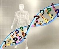 La responsabilidad social es genética, según un estudio