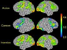 El cerebro conoce la intención de las acciones ajenas