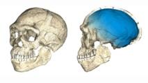 Reconstrucción de los fósiles de Homo Sapiens hallados en Marruecos.Philipp Gunz, MPI EVA Leipzig