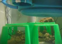 Recipiente experimental en el que las ostras fueron expuestas a diferentes  sonidos para testar su reacción ante el ruido. Crédito: Epoc, Universidad de Burdeos.