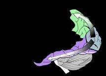Corteza visual. Fuente: Wikimedia Commons.