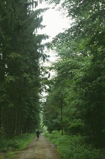 Se confirma el binomio bosques-salud. Foto: YMM