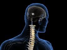 El dolor y su percepción. Georgia Pain Physicians