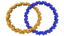 Anillos de ADN entrelazados. Fuente: Alexander Heckel.