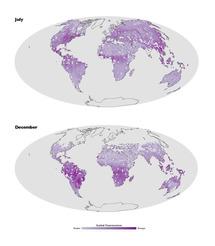 El primer mapa de la fluorescencia de las plantas terrestres muestra mayor actividad fotosintética en el hemisferio norte en julio, cuando las condiciones de temperatura y luz son más favorables al crecimiento vegetal, y lo contrario en diciembre. Fuent