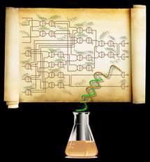 Diagrama del mayor circuito sintético realizado hasta el momento, compuesto por 74 moléculas. Fuente: Caltech/Lulu Qian.