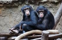 Monos colaboradores. Instituto Max Planck.