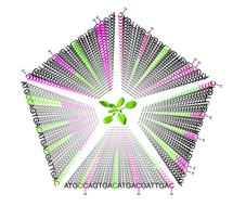 Herencia generacional de la metilación de ADN. Fuente: Instituto Salk.