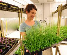 Elizabeth Haswell, en una cámara con sus plantas de laboratorio, de la especie  Arabidopsis. Fuente: Universidad de Washington.