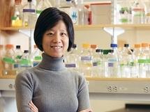Yingxi Lin, directora de la investigación. Imagen: Kent Dayton. Fuente: MIT.