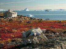 Ecosistema de la tundra, en Groenlandia. Fuente: Wikimedia Commons.