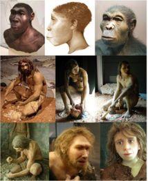 Algunas especies de Homo (de derecha a izquierda): H. habilis, H. ergaster, H. erectus; H. antecessor - hombre, mujer, H. heidelbergensis; H. neanderthalensis - mujer joven, hombre, H. sapiens sapiens. Imagen: ישראל קרול.
