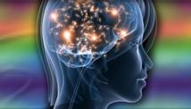 El amor y el deseo activan áreas cerebrales específicas, aunque relacionadas. Fuente: Universidad de Concordia.