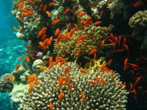 Corales. Imagen: J. Hutsch.