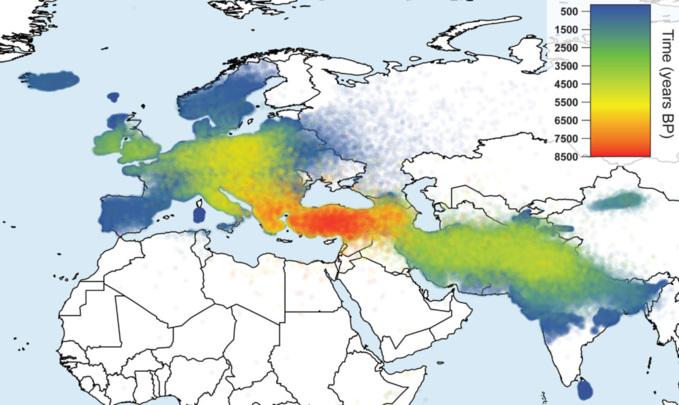 En este mapa se puede observar la difusión de las lenguas indoeuropeas. Los colores muestran la edad aproximada de cada familia con las ahora perdidas lenguas anatólicas en la base. Fuente: Materia.