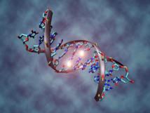 Representación de una metilación de ADN, uno de los procesos epigenéticos más conocidos. Imagen: Christoph Bock (Max Planck Institute for Informatics). Fuente: Wikimedia Commons.