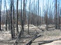 La lucha contra los incendios es uno de los objetivos del proyecto Venus-C. Imagen: Bcasterline. Fuente: Wikimedia Commons.