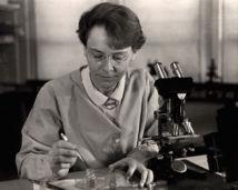 Barbara McClintock en 1947, trabajando en su laboratorio. Fuente: Wikimedia Commons.