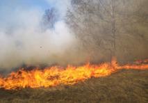 El fuego ha maltratado el bosque valenciano este verano. Imagen: qute. Fuente: StockXchng.