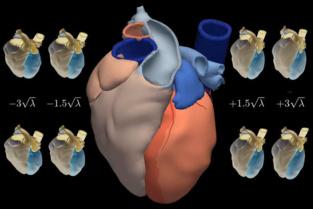 El corazón promedio, y sus variaciones estadísticas. Fuente: UPF/SINC.