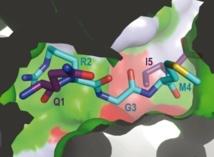 Imagen de las proteínas que participan en los procesos bacterianos analizados por el CSIC. Fuente: PLOS Biology.