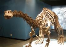 Lufengosaurus magnus. Imagen: FarleyKatz. Fuente: Wikimedia Commons.