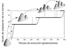 Gráfico en tiempo real del proceso de evolución virtual. El eje horizontal corresponde al tiempo de evolución y el eje vertical al grado de adaptación evolutiva de la población. En este caso, la forma del diente se adapta aumentando el número de puntas, pasando de un diente simple a uno más complejo. Fuente: UAB.