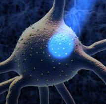 Neurocientíficos del MIT usaron luz para controlar la actividad de neuronas implicadas en el comportamiento compulsivo.  Imagen: McGovern Institute for Brain Research and Sputnik Animation. Fuente: MIT.