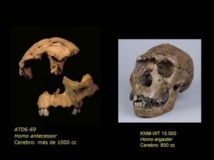 Fósiles faciales del 'chico de la Gran Dolina', encontrado en Atapuerca (Burgos) perteneciente a Homo antecessor (a la izquierda), y del 'chico de Turkana', Homo ergaster hallado en el Lago de Turkana (Kenya, África). Fuente: PLOS ONE/SINC.