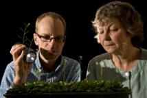 Los investigadores Martin Howard y Alison Smith. Fuente: Centro John Innes.