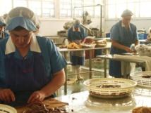 Trabajadoras manipulando anchoas en una empresa conservera de Santoña (Cantabria, España). Imagen: Gaelx. Fuente: Wikipedia.