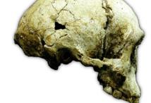 """El cráneo del """"hombre de las flores"""". Imagen: P. Brown. Fuente: Stony Brook University."""