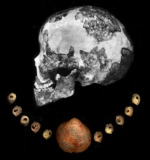 Cuentas de conchas marinas encontradas en el Líbano, en franjas similares a las de varios fósiles humanos. Imagen: Katerina Douka. Fuente: Museo de Historia Natural de Londres.