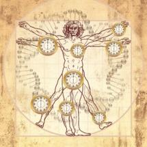 Un reloj biológico recién descubierto mide la edad a través de todo el cuerpo. Fuente: UCLA/Horvath lab.