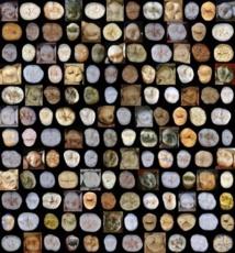 Algunos de los molares y premolares estudiados en Atapuerca. Fuente: CENIEH.
