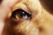 Los perros se hicieron amigos del hombre hace 19.000 años. Imagen: TheGiantVermin. Fuente: Flickr.