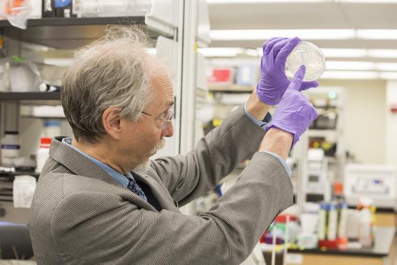 Jef Boeke en el laboratorio. Imagen: NYU Langone Medical Center. Fuente: Sinc.
