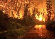 Incendio forestal. Nasa
