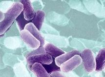 Dos experimentos realizados con bacterias refuerzan la teoría de la evolución