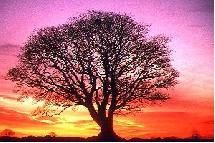 La magia de la naturaleza es el nuevo paradigma evolutivo