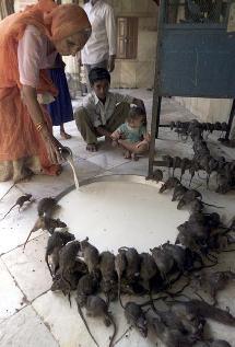 Sólo en la India