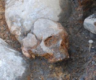 Cráneo de mujer del yacimiento de Kanaljorden en Motala (Suecia), excavado entre 2009 y 2013. Imagen: Fredrik Hallgren. Fuente: UPF.
