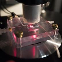 El desarrollo de este adaptador permitió a los científicos de la WUSTL analizar células de la retina y moléculas de fotopigmento cuando estas fueron expuestas a la luz infrarroja, para determinar sus reacciones. Imagen: Robert Boston. Fuente: WUSTL.