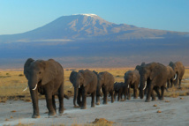 """Los grandes animales o """"megafauna"""" se enfrentan a la mayor tasa de descenso, una tendencia que coincide con los eventos de extinción anteriores, publica la revista 'Science'. Imagen: amoghavarsha.com. Fuente: Wikipedia."""