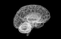 Un cerebro modelado por ordenador. Fuente: Human Brain Project.