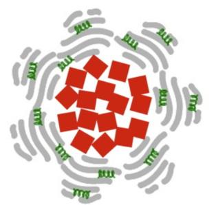Cada nanopartícula está compuesta de un núcleo de óxido de hierro (cuadrados rojos) rodeado de albúmina (en gris) y del medicamento (tPA, en verde) que debe liberar. Fuente: Laboratorio de Paolo Decuzzi.