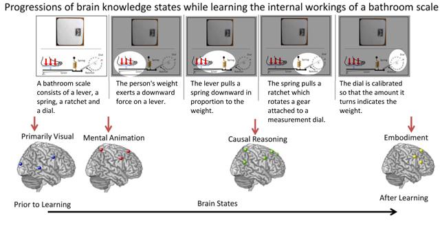 Fases del aprendizaje cerebral. Fuente: Universidad Carnegie Mellon.